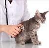 Ветеринарные клиники в Балакирево